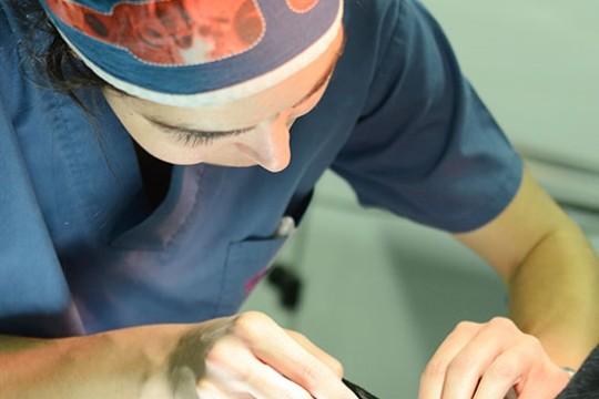 anestesia11